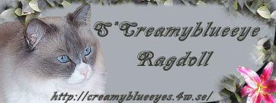 logo-s-creamy-blueeye